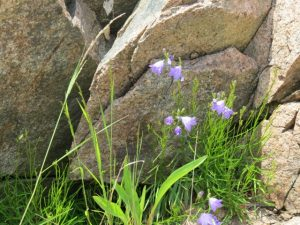 Granite and flowers