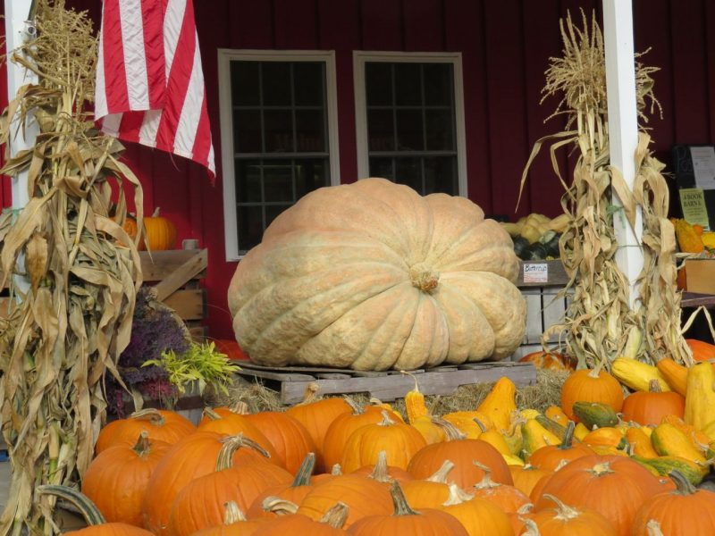 Pumpkin Display at Spear Vegetable Farm