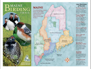 Maine Bird Trail Brochure Screen Shot http://www.mainebirdingtrail.com/Brochure.html