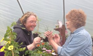 Deb from 4 Duck Greenhouse in Bowdoin, Maine solves Nancy's perrenial problem.