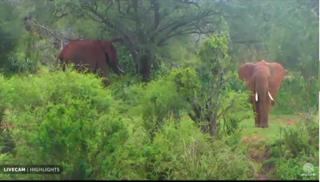 Webcam in Keyna, Africa