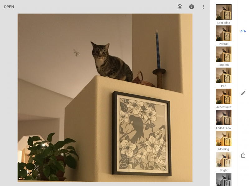Picture of cat and sprinkler in ceiling is visible.
